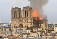 Notre Dame, il fuoco, le querce, le api